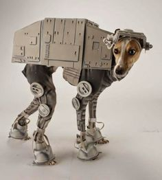 Photos: May the fourth be with you! Check out these adorable Star Wars dogs! http://pawsforreaction.com/photos-may-the-4th.html #StarWars #MayThe4th