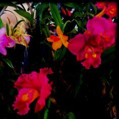 Orchids.   Plenty.  Home accoutrements.