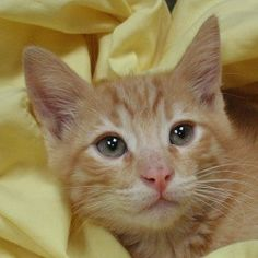 Fiesty is available for adoption!  Call us 858-676-1600!
