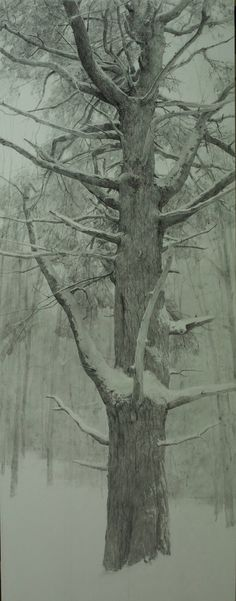 """Interior Pine"" graphite on paper, 54 x 24 in., 2016 T. Landscape Pencil Drawings, Landscape Art, Landscape Paintings, Art Sketches, Art Drawings, Graphite Drawings, Charcoal Drawings, Fine Art Drawing, Winter Trees"