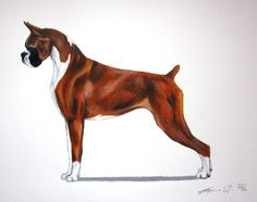 Boxer Dog - AKC Best in Show Champion - Breed Standard - Working Group - Original Art Print by EmmasBestinShow on Etsy