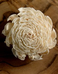 """Sola Shell Flowers ( 2.25"""") Mums Flowers 12 for $6"""