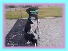 Swinging Dog Wearing Sunglasses