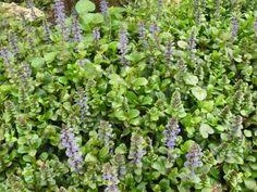 #rome#green #ortobotanico #flowers #violet #rare #biodiversity