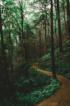 """lsleofskye: """"Forest Park - Wildwood Trail """"+c Forest Path, Tree Forest, Forest Trail, Beautiful World, Beautiful Places, Nature Landscape, All Nature, Plein Air, Pathways"""