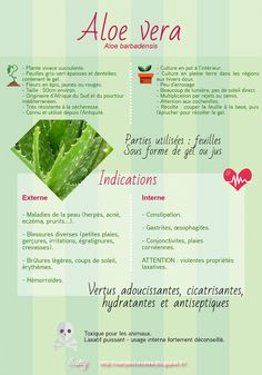 La ronce et l'arsenic: Aloe vera