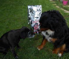 Roxy et Jumper