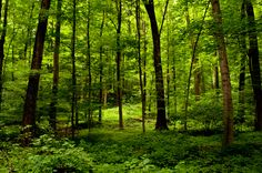 the sacred grove   Flickr - Photo Sharing!