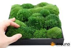Greenhill cushion / bun moss, detail