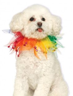 Rubies Costume Company Fancy Rainbow Pet Collar, Small/Medium >>> Read more at the image link.