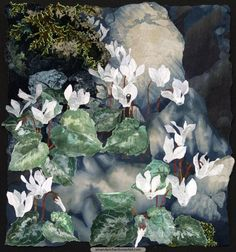 Cretan Cyclamen among Shadowed Boulders - High in the limestone mountains of Crete ancient oak trees cast shadows across the rock-face. The intense white flowers and mottled leaves of Cyclamen cretica emerge from crevices between the boulders each spring.