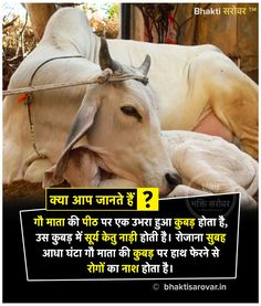 #CowFacts #India #Cow #DailyFacts #HindiFacts #DidYouKnow #facts #hinduismfacts #hindufacts #amazingfacts #Hinduism #inhindi #hindi #hindudharma #Blessings #BhaktiSarovar Gernal Knowledge, General Knowledge Facts, Knowledge Quotes, Real Facts, Fun Facts, Hinduism Quotes, Learn To Fight Alone, Geeta Quotes, Interesting Facts In Hindi