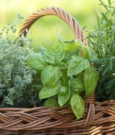 harvesting herbs: learn when and how to pick and preserve