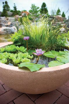 Container water garden ideas - THIS COULD ALSO BE A GREAT IDEA FOR A BALCONY!! ONE COULD ALSO ADD A FEW FISH TO MAKE LIFE A LITTLE MORE INTERESTING OUI!! (I so love this!!)