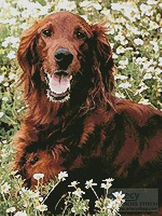 Irish Red Setter 2 - cross stitch pattern designed by Tereena Clarke. Category: Dogs.