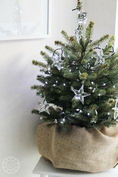 kerstboompjes in jutten zak