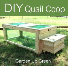 DIY Mobile Quail Coop