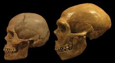 Neanderthals' failure to make parkas may have sealed their demise