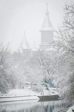 Timisoara Tin, Snow, Photos, Outdoor, Outdoors, Pewter, Outdoor Games, The Great Outdoors, Eyes