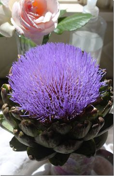 A flowering artichokem from Berumen at Encinitas farmers market.