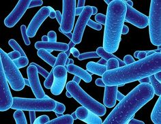 #Researchers uncover potential role of gut bacteria in neurodegeneration - News-Medical.net: The Courier-Journal Researchers uncover…