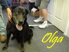 [Waycross, GA] SOS!!! DONT LET OLGA DIE....I AM BEGGING FOR THIS SWEET SOUL!  I'm Olga! I'm a super friendly girl who came in through Animal Control after being found as a stray. I love people and there's nothing I love more than having my ears scratched and my belly rubbed! Sponsor: http://okefenokeehumanesociety.chipin.com/olga-hw  HW Status: POSITIVE  Age: 3 years  Breed: Lab/Shepherd mix  Weight: 91.4lbs  Gender: FEMALE