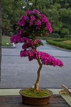 Como cultivar uma flor assim??? Paciência e Amor
