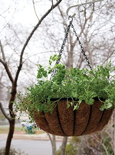 P. Allen Smith: How to Grow Your Own Groceries In a Small Space - AY Magazine - February 2013 - Arkansas