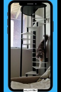 No Equipment Workout, Fitness Equipment, Cat Exercise, Cat Activity, Happy Animals, Cat Tree, Cat Furniture, Funny Animal Videos, Cat Memes