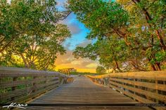 MacArthur Park Sunset Boardwalk Under Mangroves