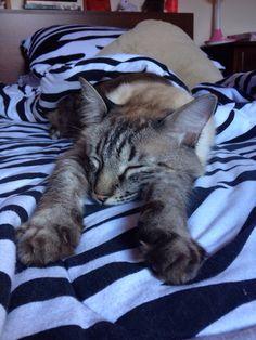 Calvin Kat sound asleep