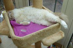 Bijoux is sleeping