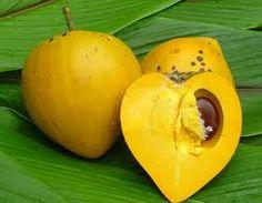 Canistelfruta huevo también conocido como Canistel- Esta es una fruta extraña Eso Cortados en medio parece un corazón. Es de color naranja y el tamaño aproximado de una pelota suave. Su sabor es muy similar a una calabaza o batata. En primer lugar vamos a ablandar a comer fuera del árbol como si fuera un melocotón. Luego cortar la parte superior y saca la carne de color naranja. La textura es similar a la de una yema de huevo.