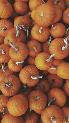 31 Free Amazing Fall iPhone Wallpaper Backgrounds For Fall Aesthetic October Wallpaper, Cute Fall Wallpaper, Pretty Phone Wallpaper, Calendar Wallpaper, Iphone Background Wallpaper, Fall Backgrounds Iphone, Halloween Backgrounds, Halloween Wallpaper, Iphone Wallpaper Herbst