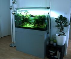 Vue d'ensemble par florianf. #aquascaping #aquarium #fish