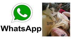 Comedy Videos Whatsapp Funny Videos | Cat Press Girls Boobs Funny Whatsapp Videos, Funny Videos, Viral Videos, Cat Gif, Latest Video, Boobs, Comedy, Cats, Girls