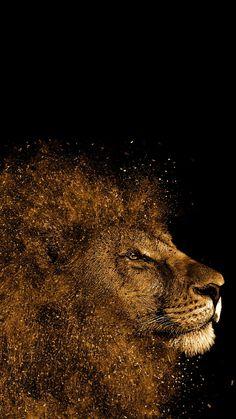Lion Wallpaper Iphone 7 Wallpapersharee Com