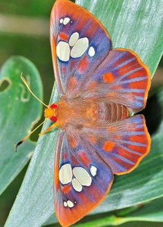 Different Types of Butterflies Cool Insects, Bugs And Insects, Butterfly Pictures, Butterfly Wings, Butterfly Kisses, Butterfly Flowers, Beautiful Bugs, Beautiful Butterflies, Beautiful Creatures