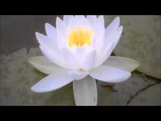 Exercice pleine conscience de Christophe André 360pH.264-AAC) - YouTube
