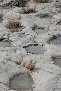 Dinosaur tracks at Picketwire Canyon in eastern Colorado. Real Dinosaur, Dinosaur Tracks, Dinosaur Fossils, Extinct Animals, Prehistoric Animals, Bambi, Dinosaur Prints, Walking With Dinosaurs, Urban Legends
