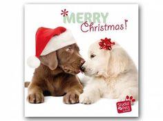 Myrna - Print Arts von Studio PetsMyrna Weihnachtskarte: Welpe Labbi und Goldi