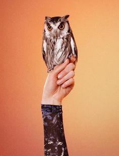 yourmothershouldknow:    Campaña: Edun Otoño/Invierno 2012  Modelos, búhos y halcones fotografiados por Ryan McGinley.  …..  Campaign: Edun Autumn/Winter 2012  Models, owls and falcons shot by Ryan McGinley.