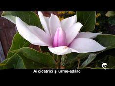ÎMBĂTRÂNIM, FRUMOASĂ DOAMNĂ - YouTube Youtube, Plants, Plant, Youtubers, Youtube Movies, Planets
