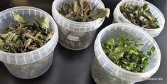Blogul lui Cătă: Ierburi uscate prin deshidratare Valeur Nutritive, Cata, Blog, Bergamot Orange, Herbs, Parsley, Basil, Home Made, Plant