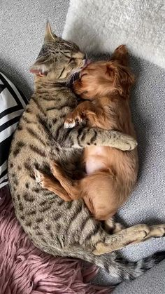 funny dogs and cats – Gomondal - Baby Animals Cute Little Animals, Cute Funny Animals, Funny Dogs, Cute Animal Videos, Tier Fotos, Cat Memes, Blackpink Memes, Animals Beautiful, Cats And Kittens