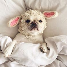 French Bulldog in a Crocheted Bunny Hat. Animals And Pets, Baby Animals, Funny Animals, Cute Animals, Cute Puppies, Cute Dogs, Dogs And Puppies, Doggies, Gato Animal