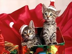 auguri di buon natale e felice anno nuovogreeting merry christmas and happy new year - Merry Christmas Cat