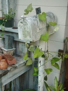 Another use for old mail box...trellis