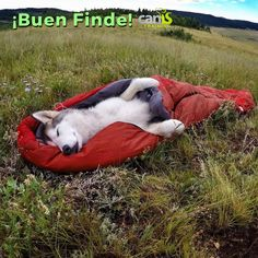 ¿Ya tenéis planes para este finde?  A disfrutar con los perros al aire libre Emoticón wink #perros   #mascotas   #findesemana   #ideas   #animales   #amor   #humor
