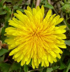 new hampshire wildflowers scenery | May 3, 2014 by New Hampshire Garden Solutions